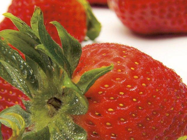 Erdbeere Domus